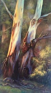 Twin Gums at King Parrot Creek. (26 x 46cm)